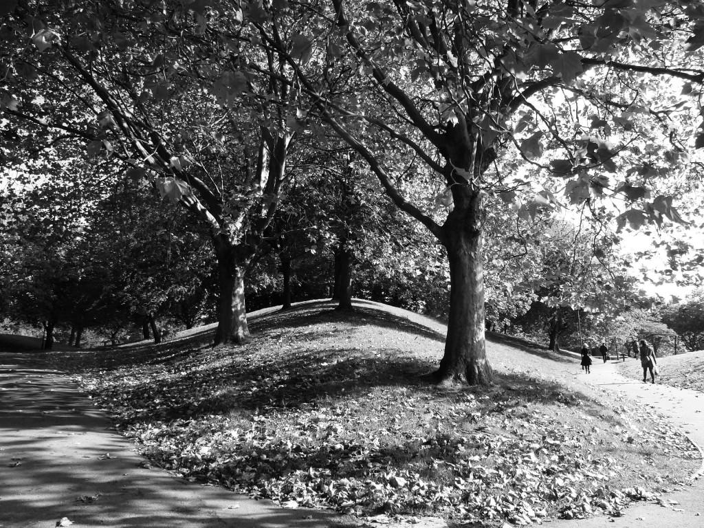 B&WtreesC.Park