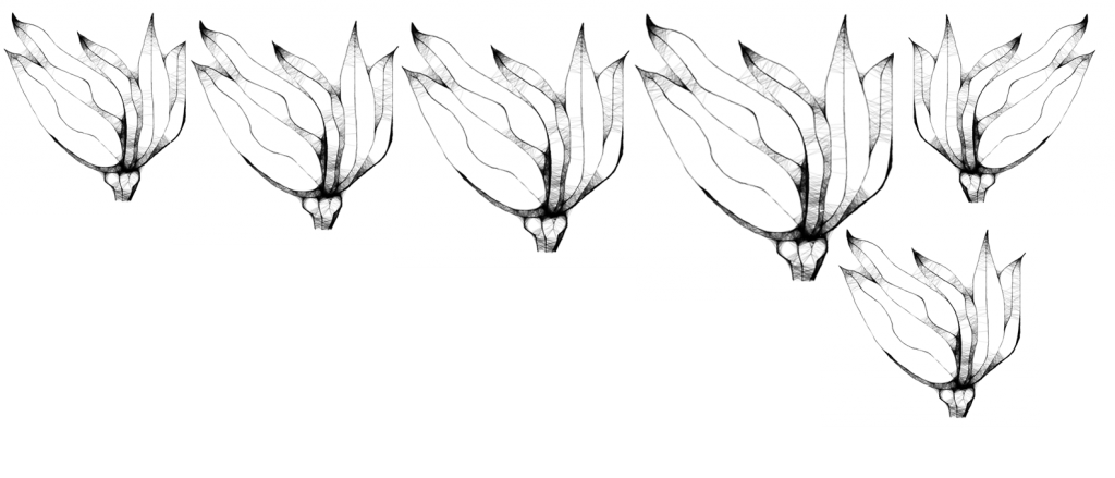 spiky flower scribble panel